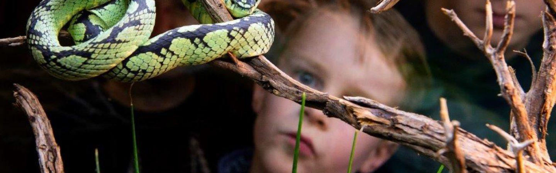 Natuurmuseum Fryslân gaat weer open vanaf 1 juni
