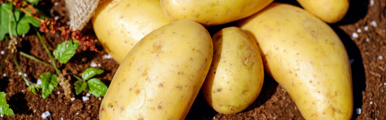 Help de boer en haal aardappelen op bij het WTC