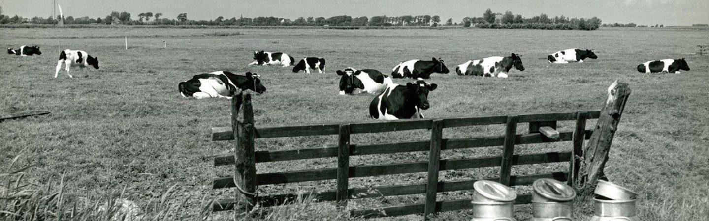 Expositie 'Us Keet' vanaf 1 juli in het Fries Landbouwmuseum